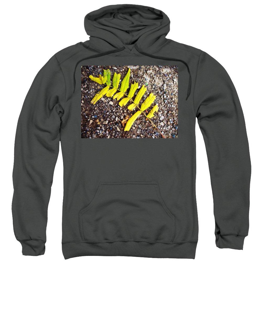 Leaves Sweatshirt featuring the photograph Fallen Branch by Samiksa Art