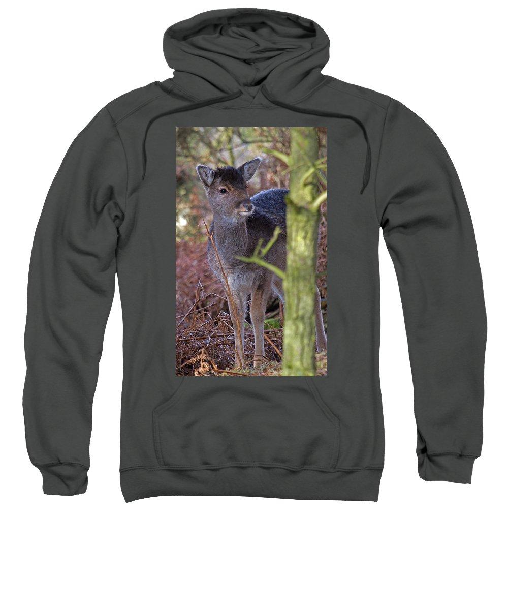 Fallow Deer Sweatshirt featuring the photograph Fallow Deer Fawn by Bob Kemp
