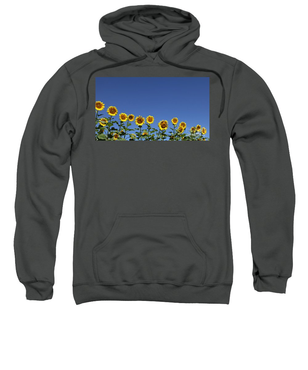 Sunflowers Sweatshirt featuring the photograph Family Time by Amanda Barcon