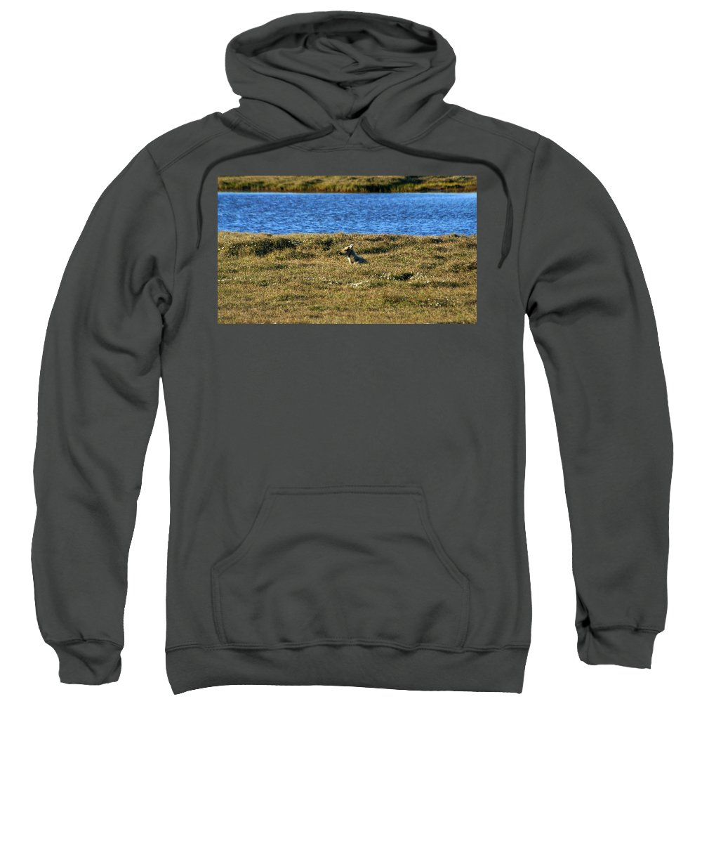 Caribou Sweatshirt featuring the photograph Fawn Caribou by Anthony Jones