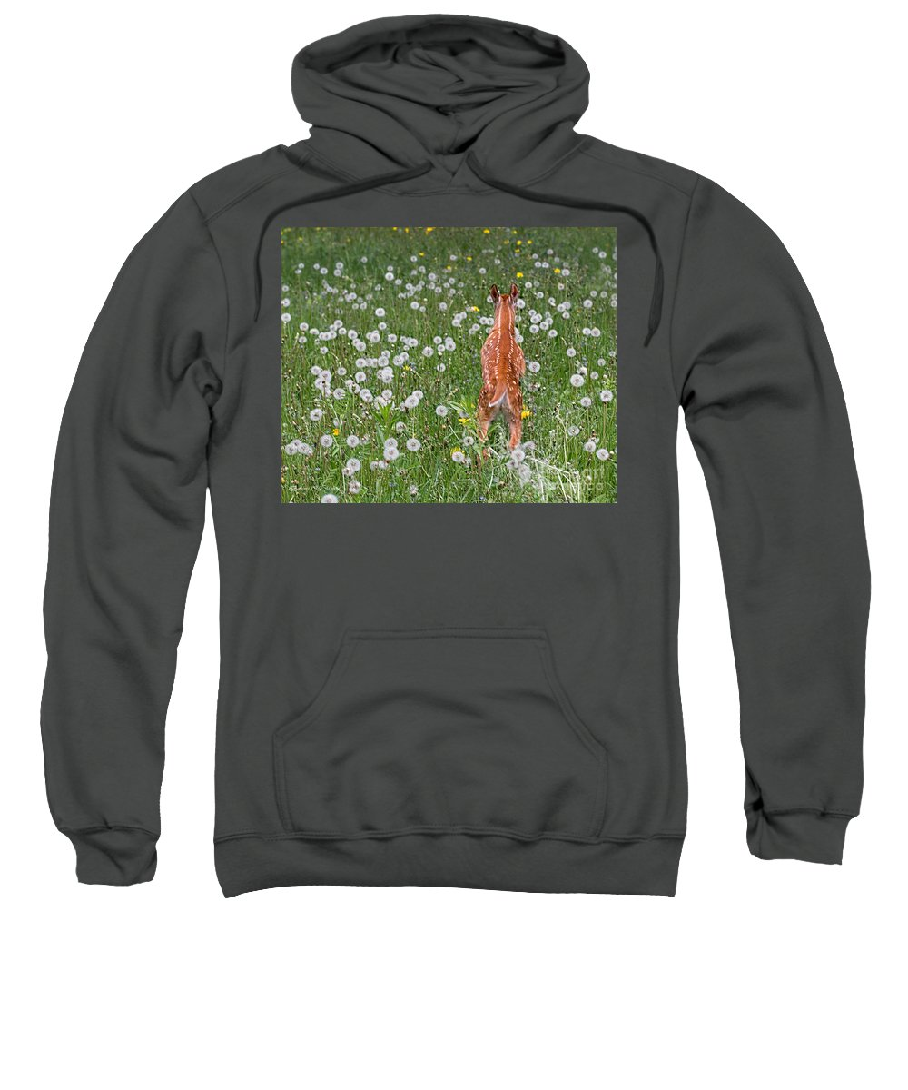 Fawn Sweatshirt featuring the photograph Fawn Memories by Barbara McMahon