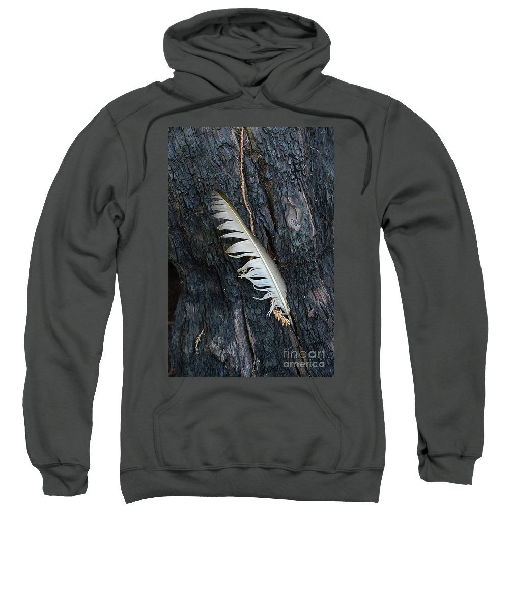 Tree Sweatshirt featuring the photograph Feather In Burnt Tree by Bruce Chevillat