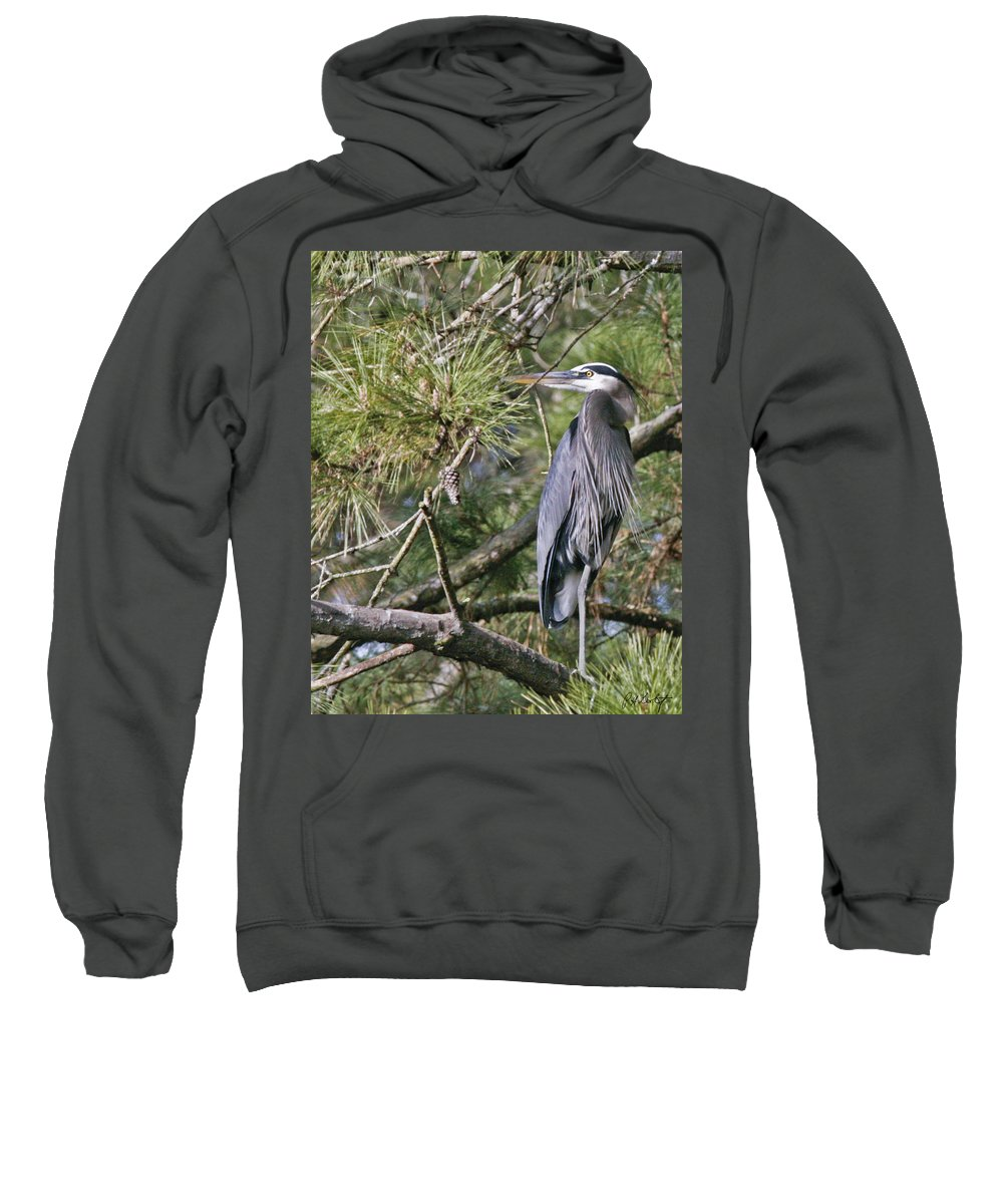 Bird Sweatshirt featuring the photograph Feathers by Phill Doherty