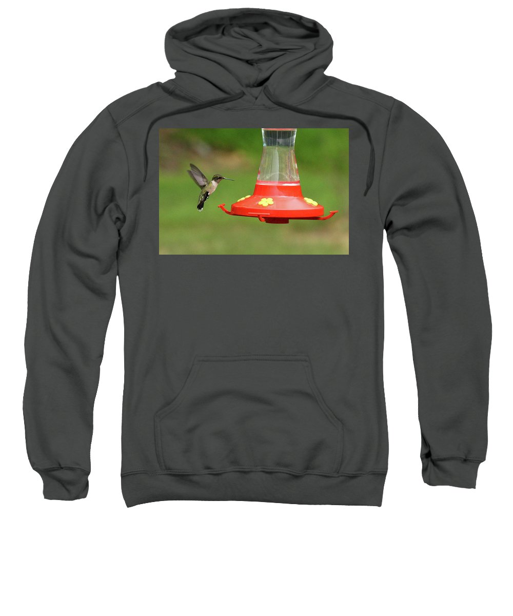 Bird Sweatshirt featuring the photograph Feeding Time by Lou Ford