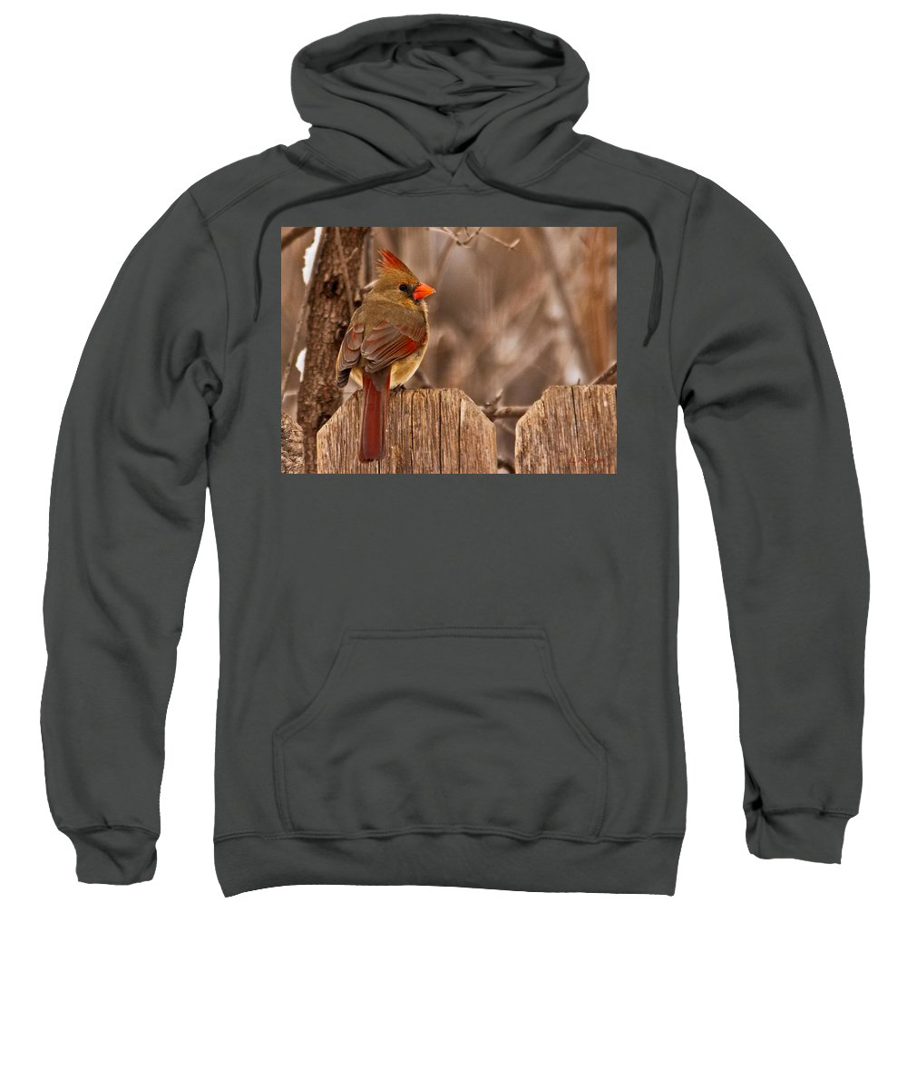 Northern Cardinal Sweatshirt featuring the photograph Female Cardinal On The Fence by Edward Peterson
