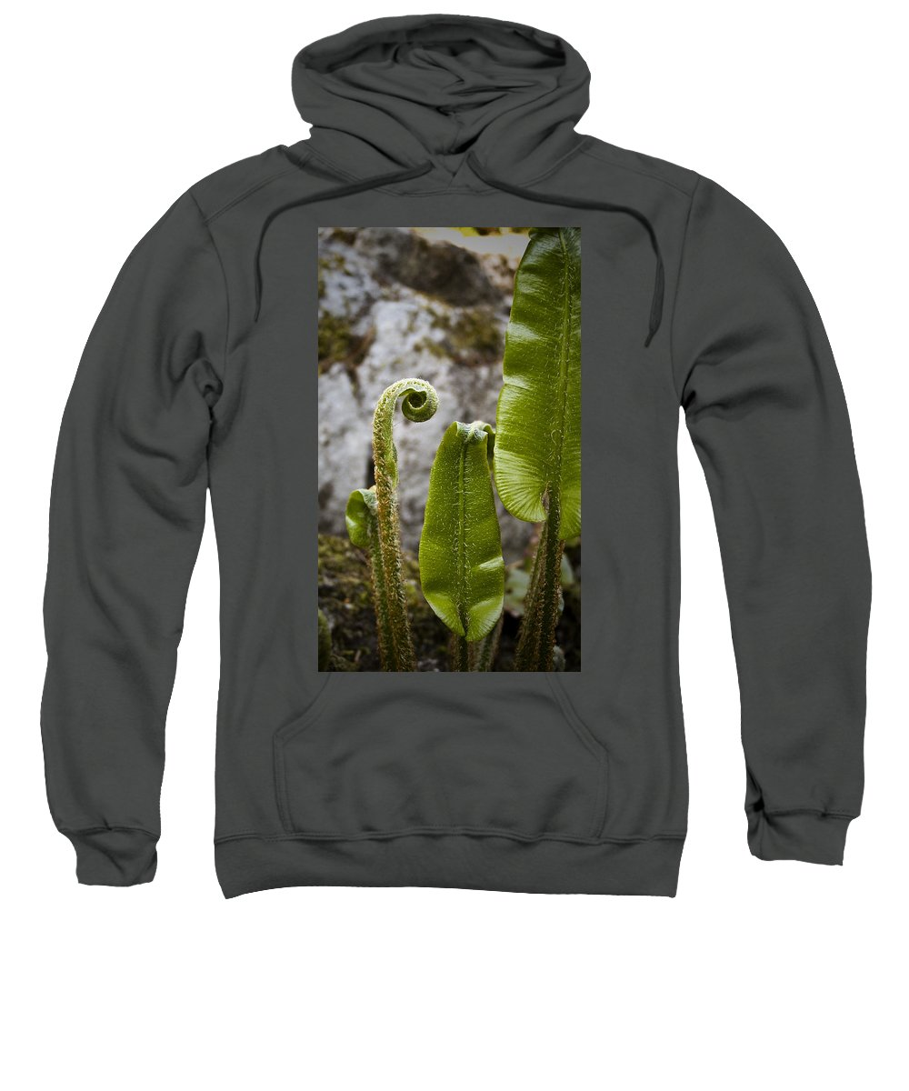 Irish Sweatshirt featuring the photograph Fern Study At Blarney Castle Ireland by Teresa Mucha