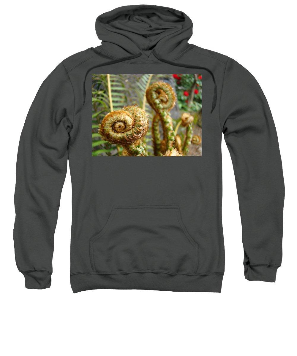 Fern Sweatshirt featuring the photograph Ferns Art Print Forest Fern Artwork Canvas Baslee Troutman by Baslee Troutman