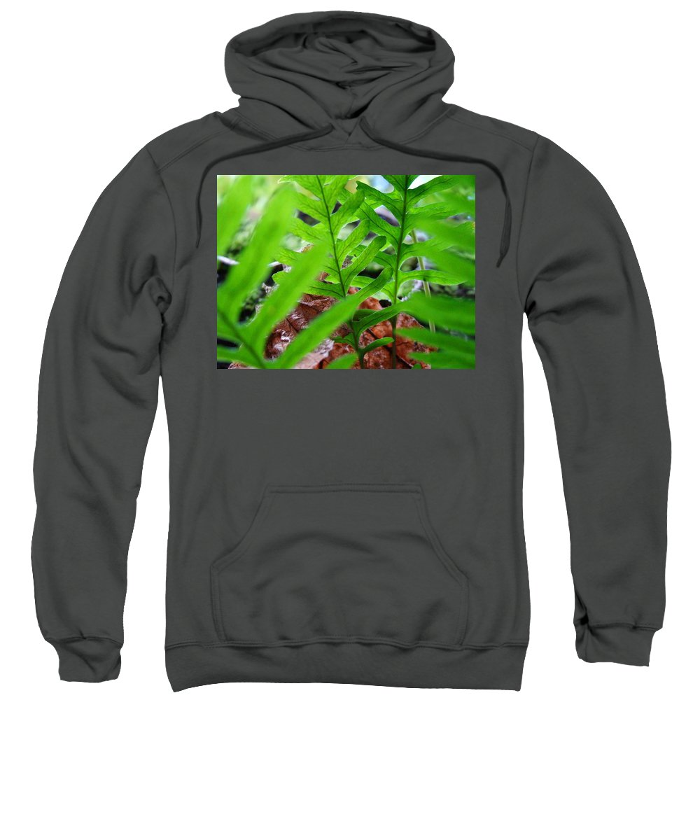 Fern Sweatshirt featuring the photograph Ferns Art Prints Forest Ferns Giclee Art Prints Basle Troutman by Baslee Troutman