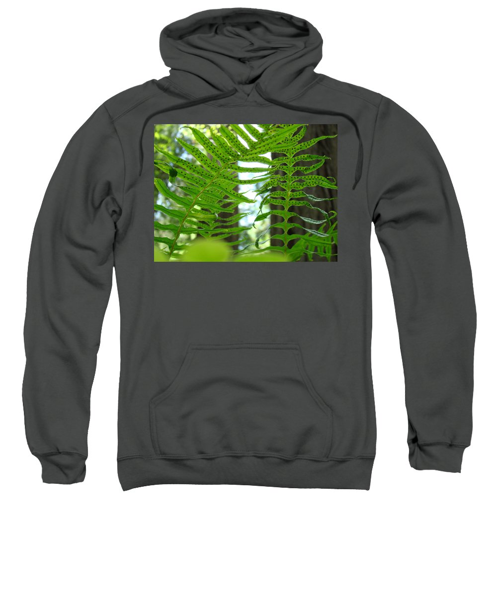 Fern Sweatshirt featuring the photograph Ferns Green Redwood Forest Fern Giclee Art Prints Baslee Troutman by Baslee Troutman