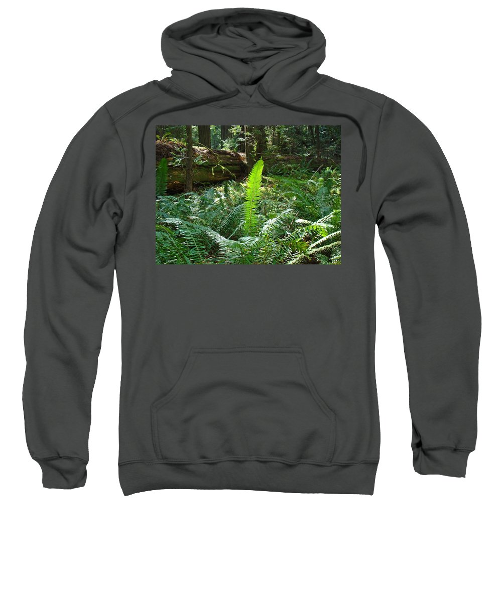 Fern Sweatshirt featuring the photograph Ferns Sunlit Redwood Forest Fern Giclee Art Prints Baslee Troutman by Baslee Troutman
