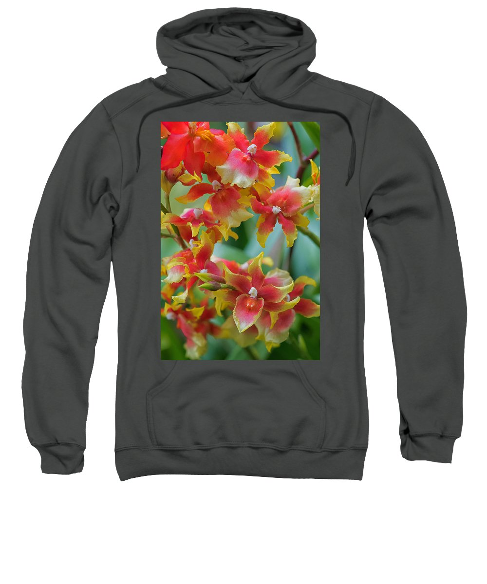Abstract Sweatshirt featuring the photograph Festive Orchids by Zina Zinchik