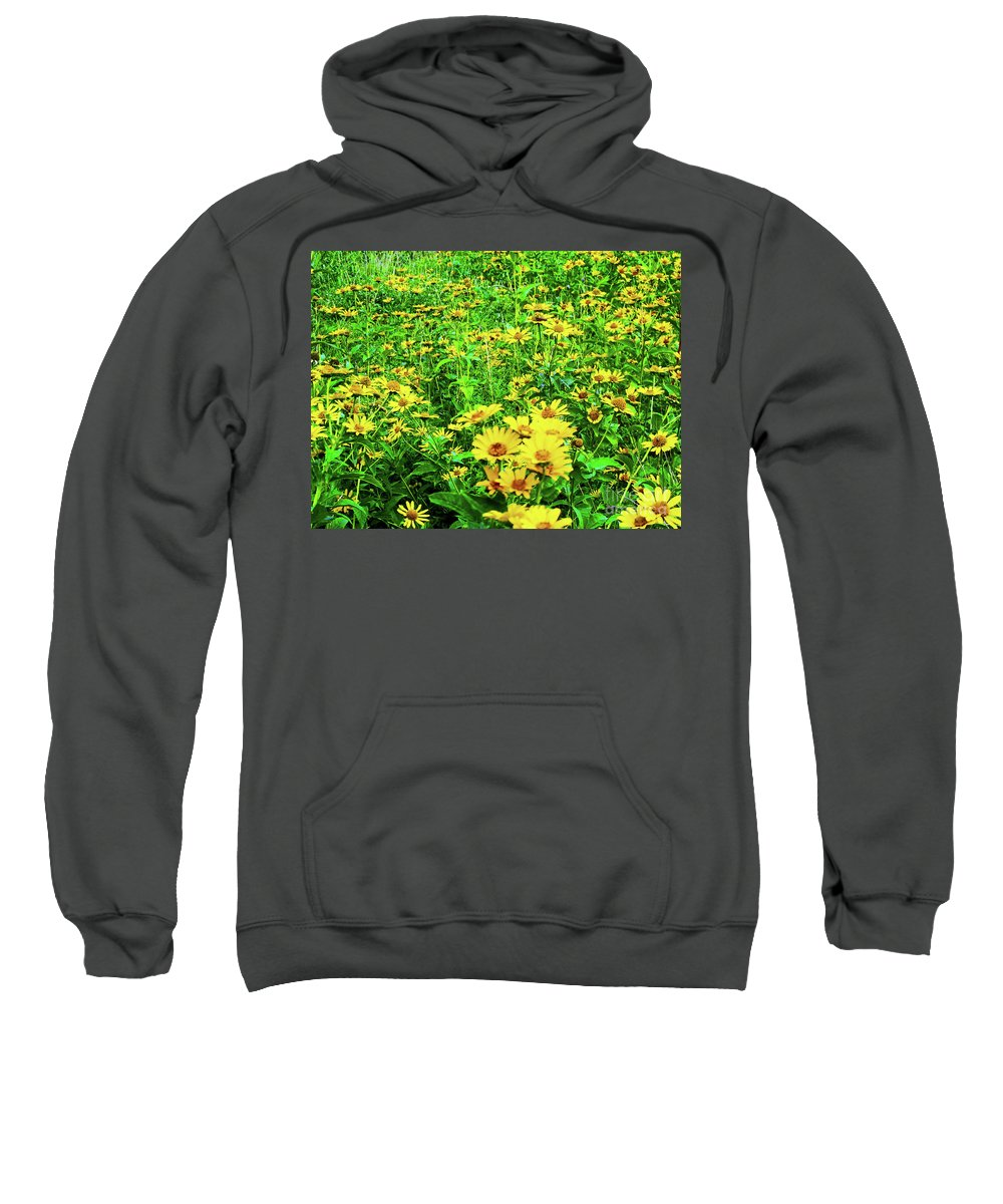 Nature Sweatshirt featuring the photograph Field Of Daisies by Don Baker