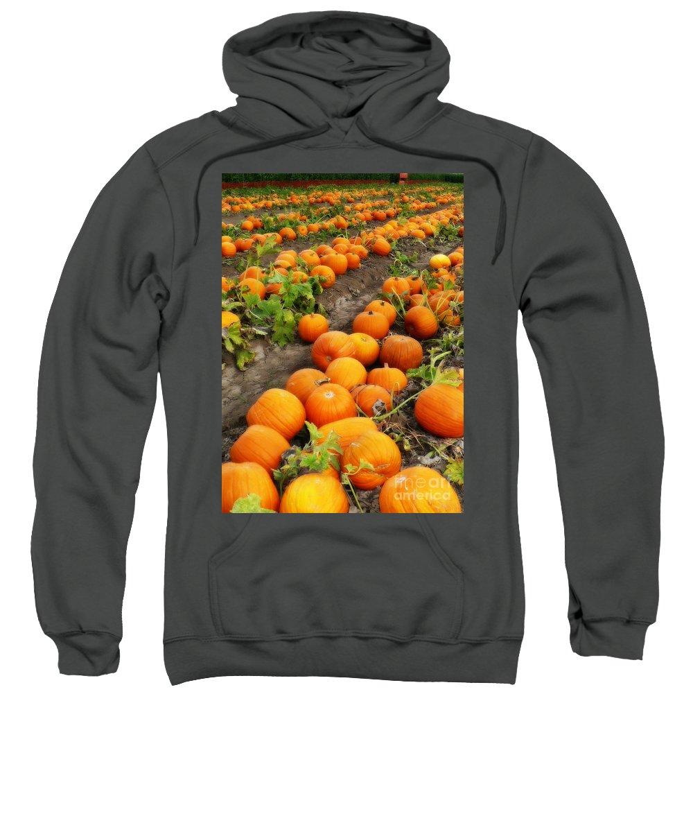 Pumpkins Sweatshirt featuring the photograph Field Of Pumpkins Card by Carol Groenen