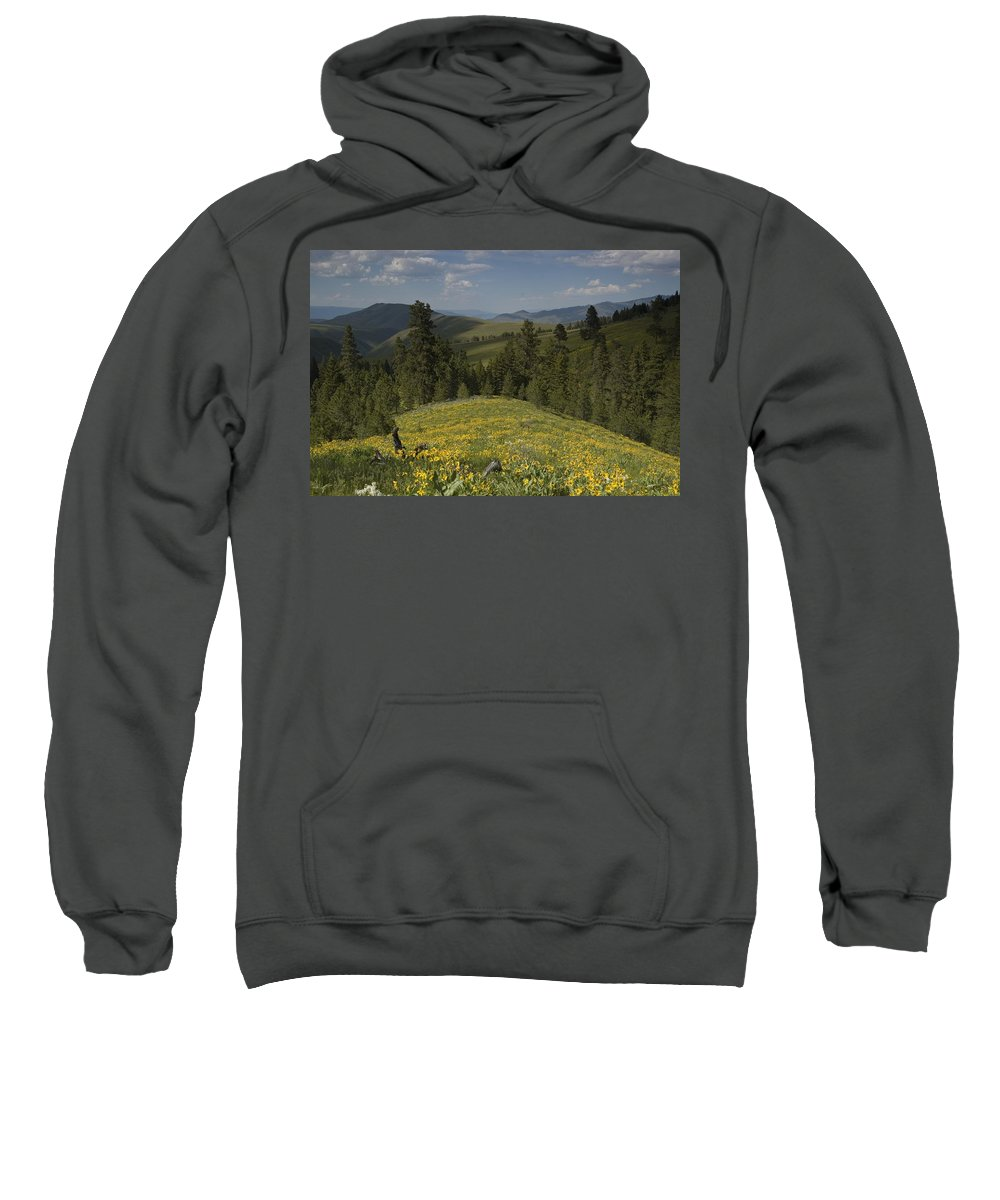 Field Sweatshirt featuring the photograph Field Of Yellow Flowers by Sara Stevenson