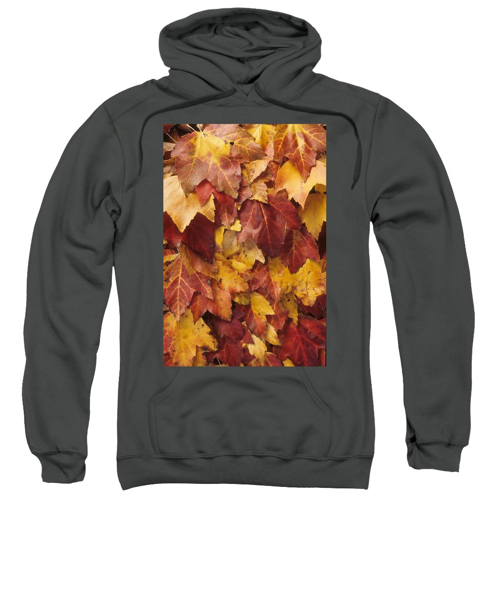 Fall Sweatshirt featuring the photograph Final Fall In File by Laurie Paci