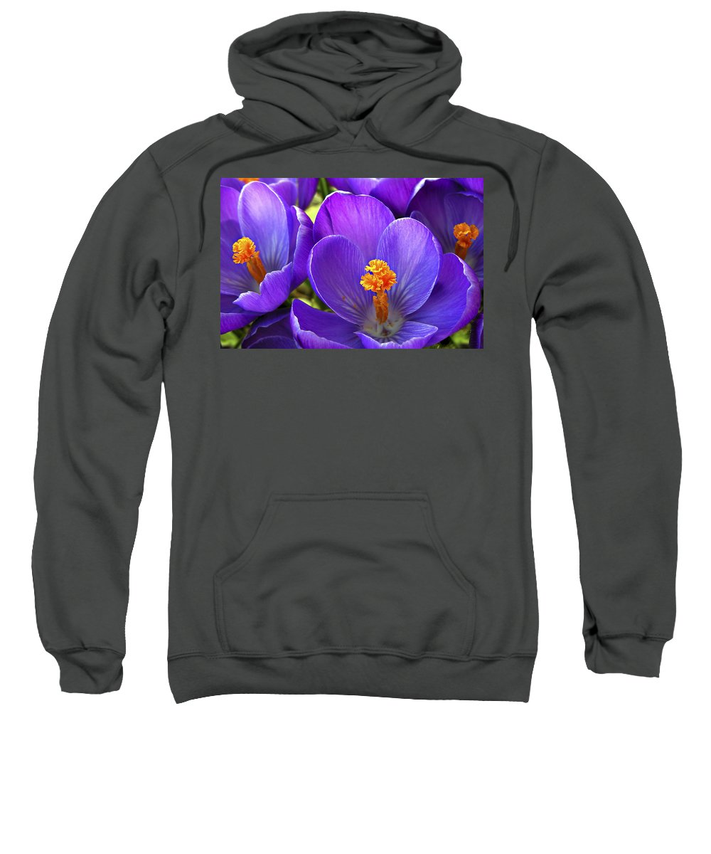 Flower Sweatshirt featuring the photograph First Crocus by Marilyn Hunt