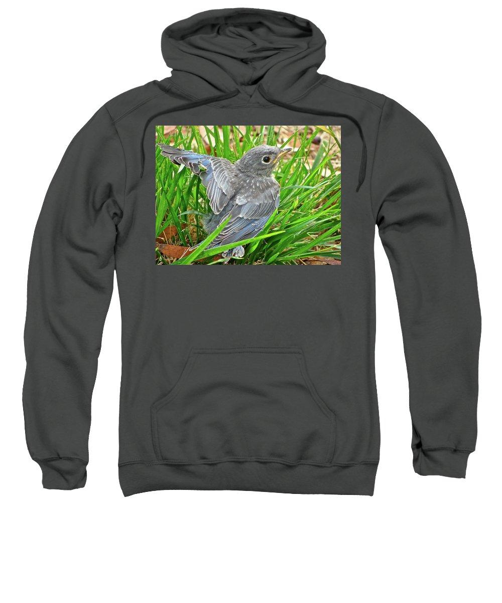 Bird Sweatshirt featuring the photograph First Flight by Diana Hatcher