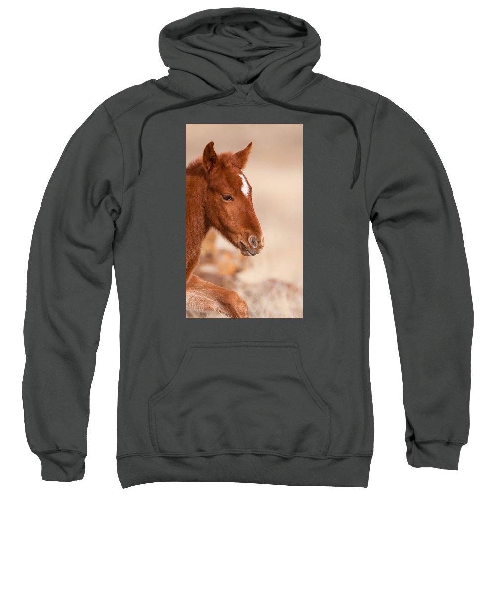 Wild Horse Sweatshirt featuring the photograph First Steps by Kent Keller