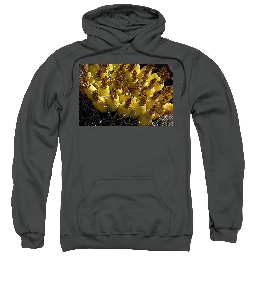 Cactus Sweatshirt featuring the photograph Fishhook Barrel Cactus Fruit by Phyllis Denton