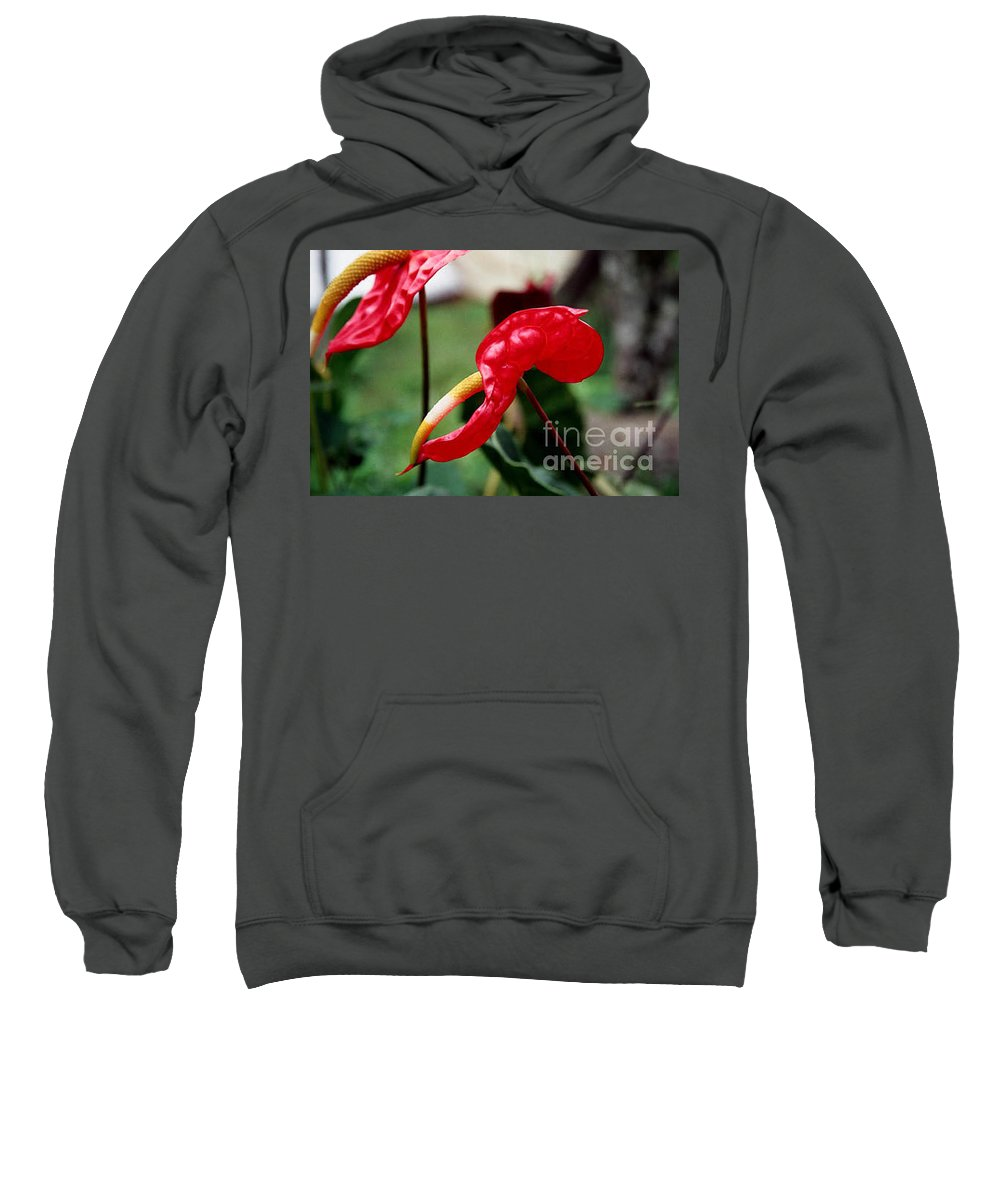 Exotic Flowers Sweatshirt featuring the photograph Flamingo Flower by Kathy McClure