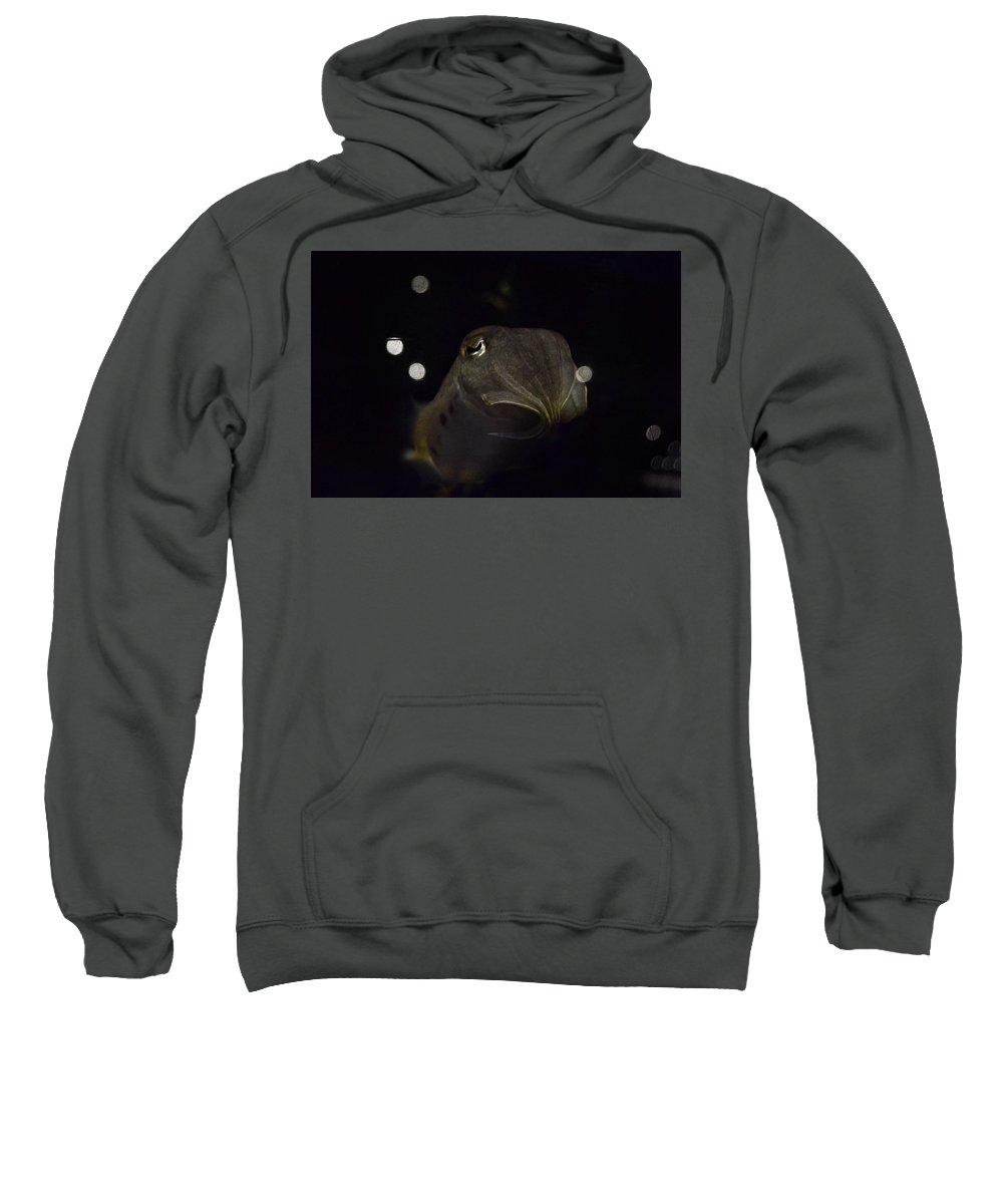 Animals Sweatshirt featuring the photograph Aquatic Astronaut by Stephanie Varner