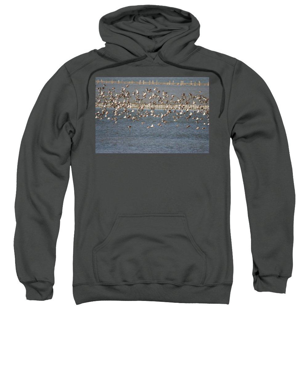 River Life Sweatshirt featuring the photograph Flock Of Birds In Flight by Cliff Norton