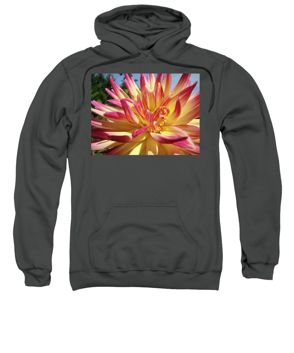 Dahlia Sweatshirt featuring the photograph Floral Art Prints Bright Dahlia Flower Canvas Baslee Troutman by Baslee Troutman