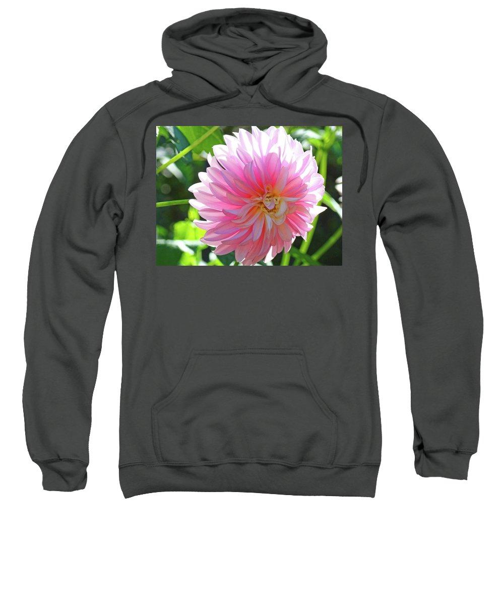 Dahlia Sweatshirt featuring the photograph Floral Art Prints Pink Dahlias Sunlit Baslee Troutman by Baslee Troutman