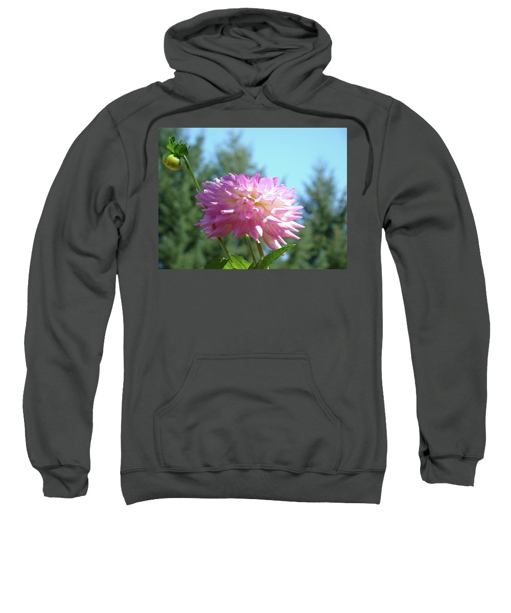 Dahlia Sweatshirt featuring the photograph Floral Art Prints Pink White Dahlia Flower Pastel Baslee Troutman by Baslee Troutman