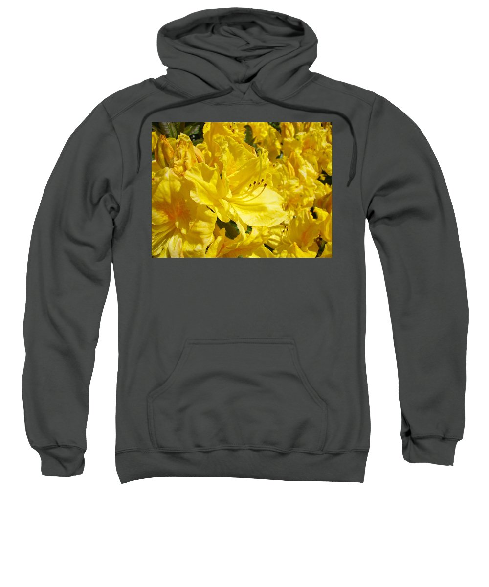 Rhodies Sweatshirt featuring the photograph Floral Rhododendrons Garden Art Print Yellow Rhodies Baslee Troutman by Baslee Troutman