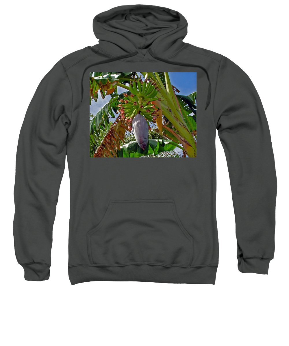 Banana; Bunch; Fruit; Flower; Tree; Stalk; Growing; Florida; Melbourne; Beach; Hand; Baby; Green; Le Sweatshirt featuring the photograph Florida Banana Flower And Fruit by Allan Hughes