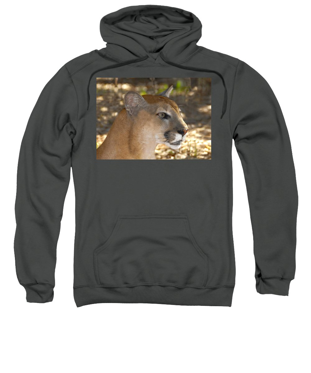 Florida Sweatshirt featuring the photograph Florida Panther by David Lee Thompson