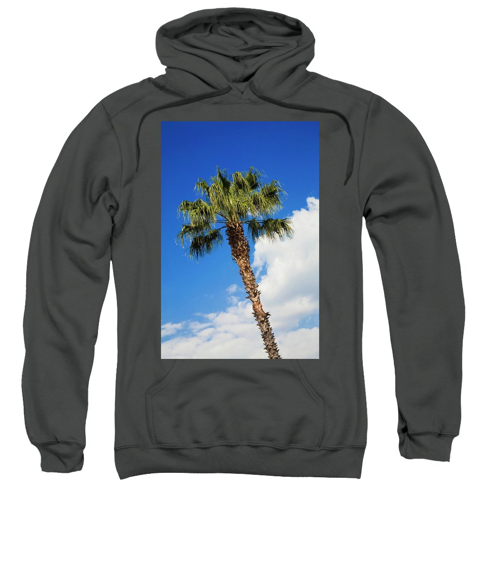 Florida State Tree Sweatshirt featuring the photograph Florida State Tree by Diane Macdonald