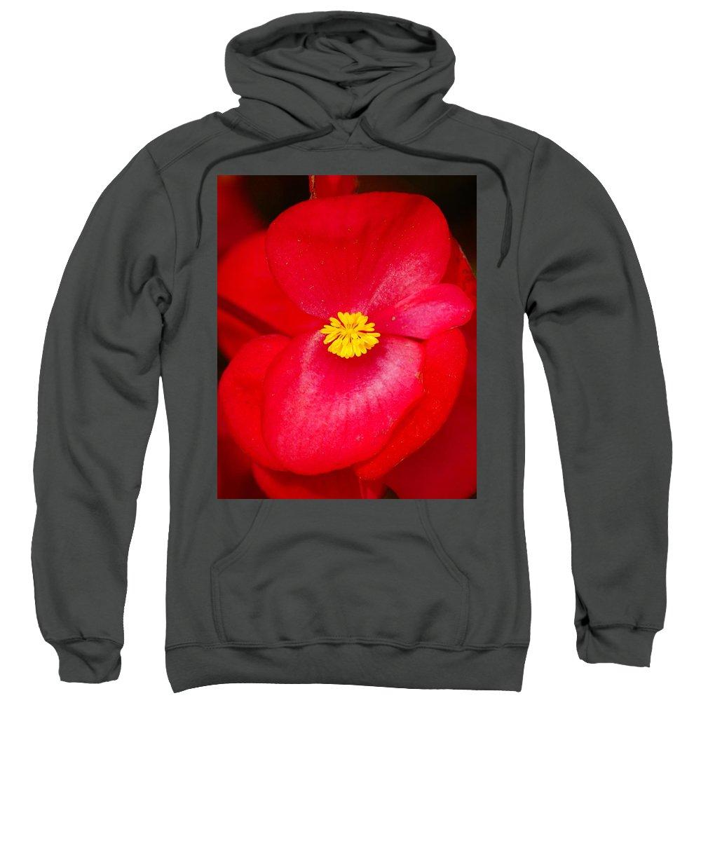 Flowers Sweatshirt featuring the photograph Flower 8 by Ben Upham III