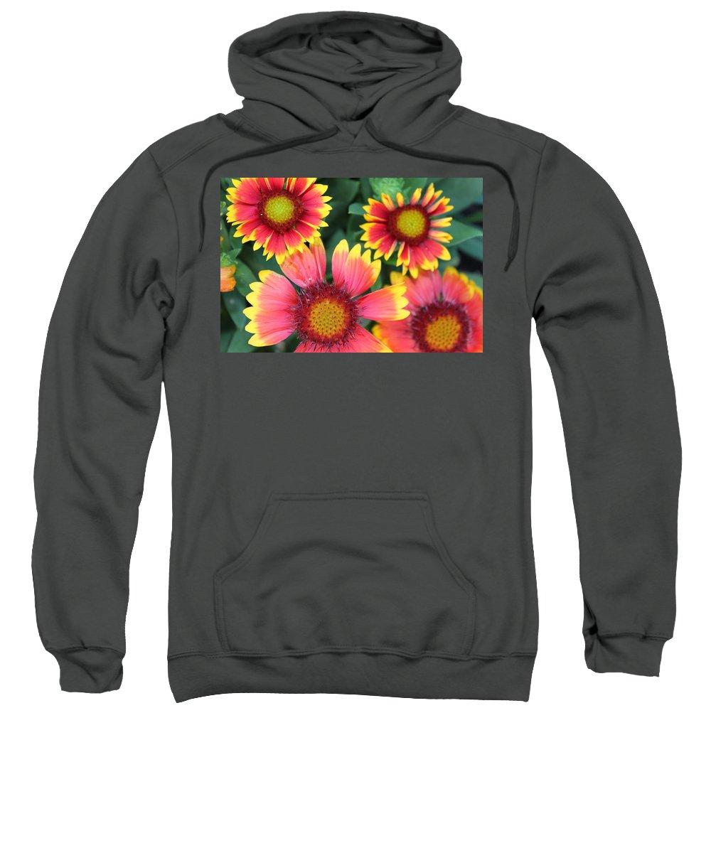 Flower Sweatshirt featuring the photograph Flower Burst by Lauri Novak