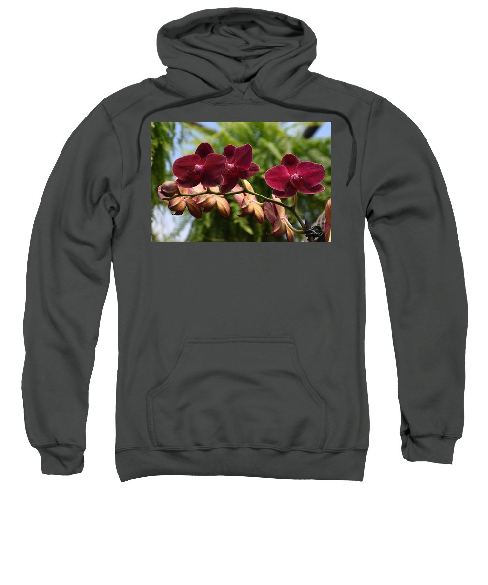 Orchids Photos Sweatshirt featuring the photograph Flowers 823 by Joyce StJames
