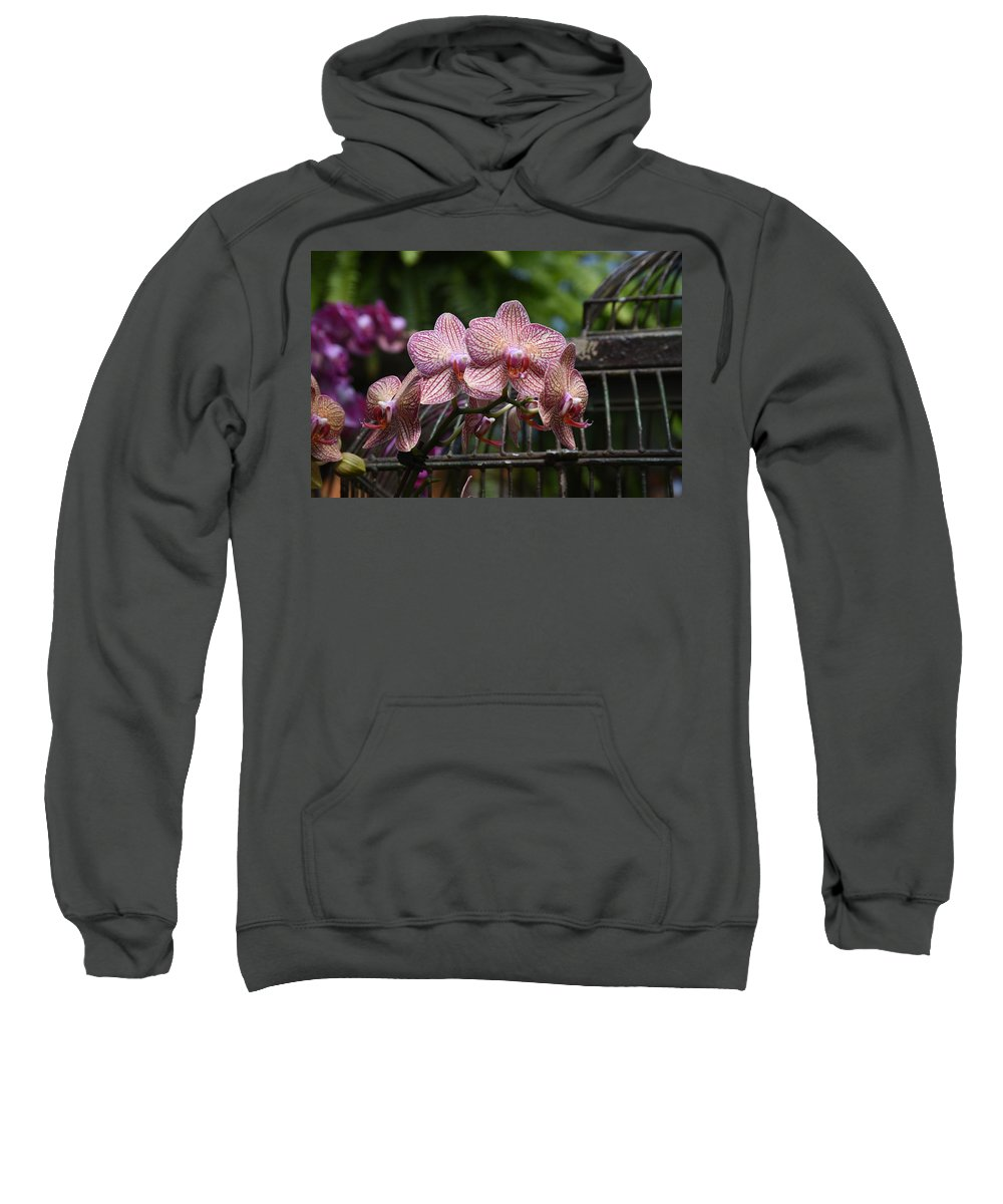 Orchids Photos Sweatshirt featuring the photograph Flowers 826 by Joyce StJames