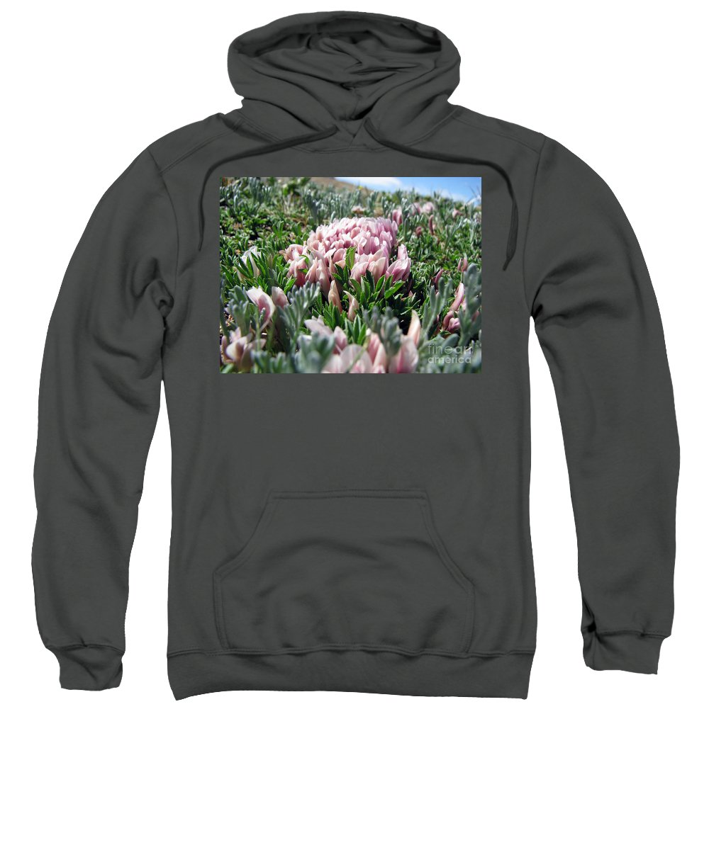 Flowers Sweatshirt featuring the photograph Flowers In The Alpine Tundra by Amanda Barcon