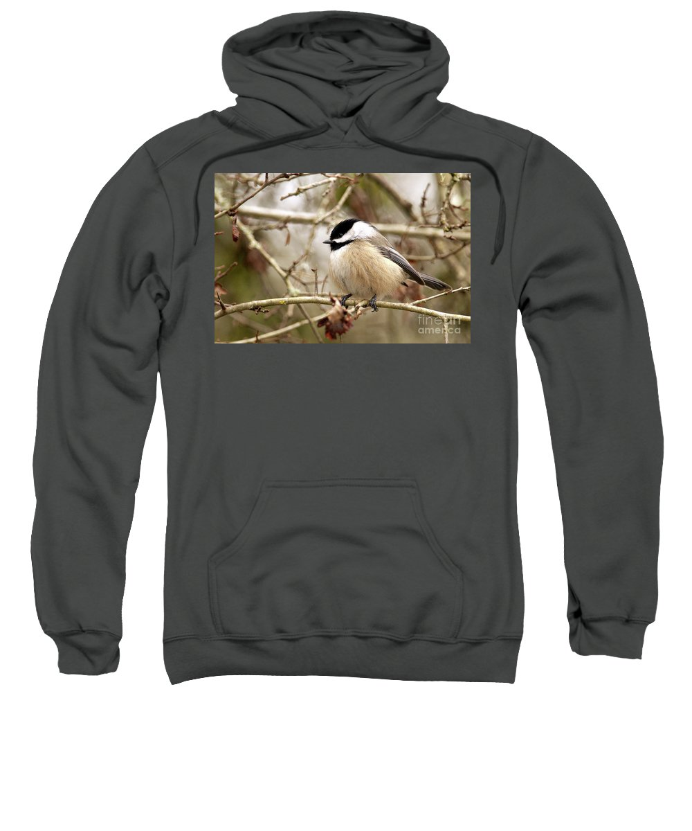 Black-capped Chickadee Sweatshirt featuring the photograph Fluffy Chickadee by Sharon Talson