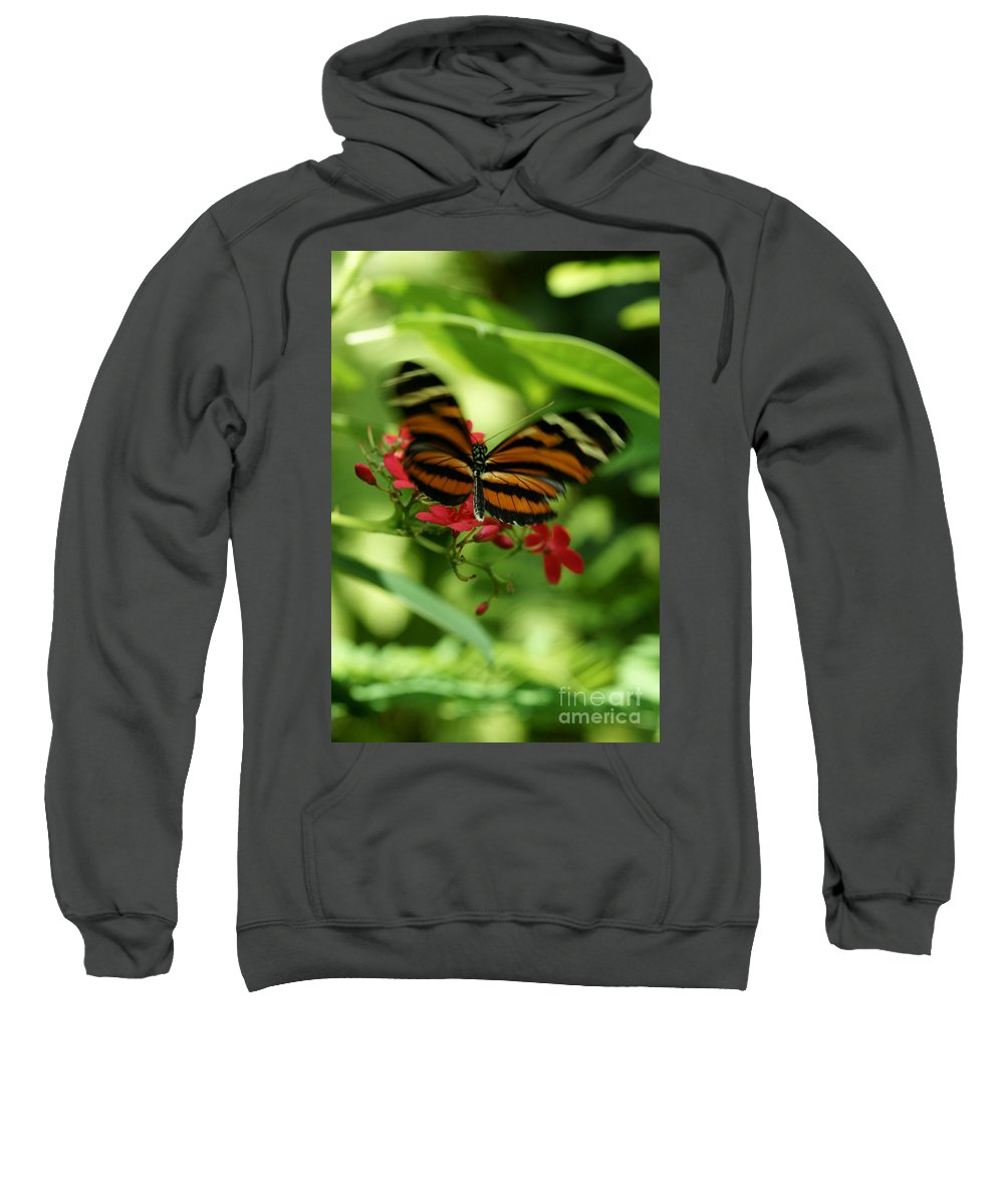Butterfly Sweatshirt featuring the photograph Flutterby by Linda Shafer
