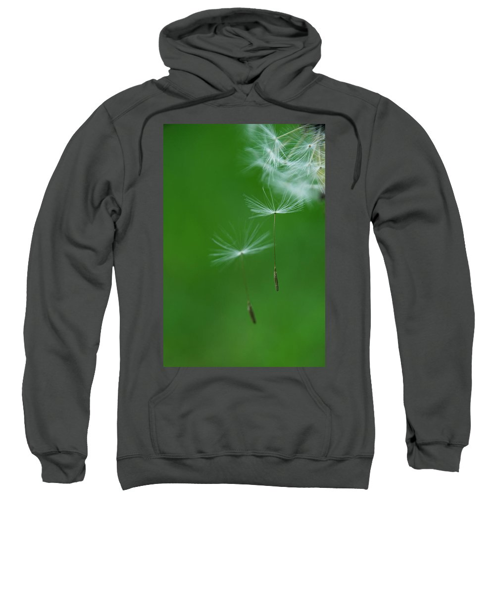 Seed Sweatshirt featuring the photograph Flying by Duc Truc Nguyen
