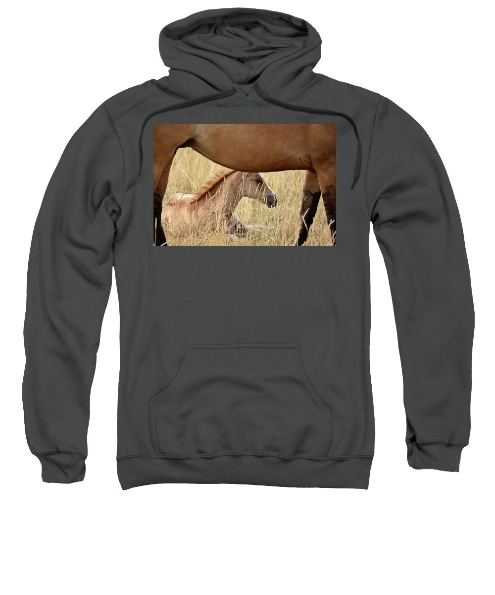 Horse Sweatshirt featuring the digital art Foal And Mare In A Saskatchewan Pasture by Mark Duffy