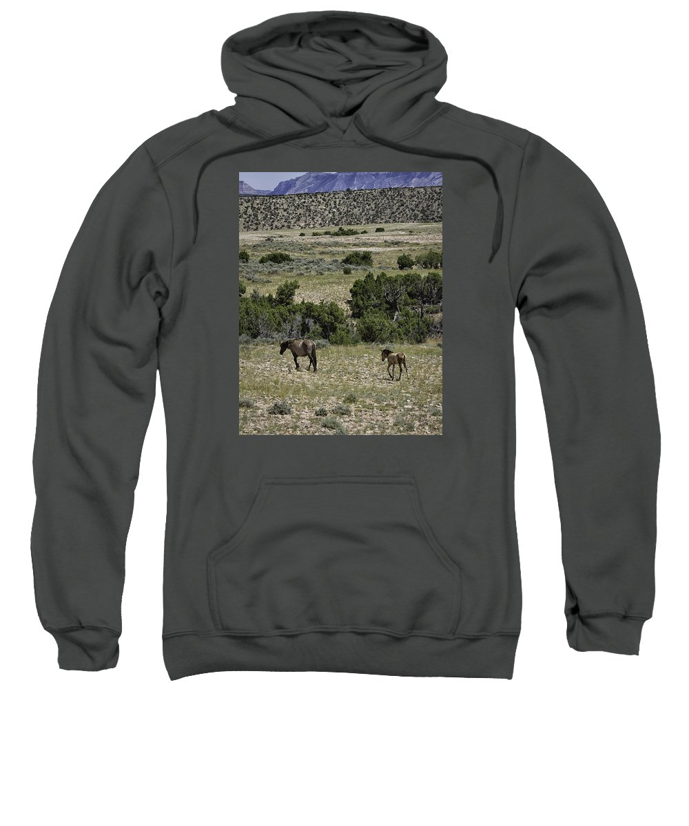 Wild Horse Sweatshirt featuring the photograph Following Momma by Elizabeth Eldridge