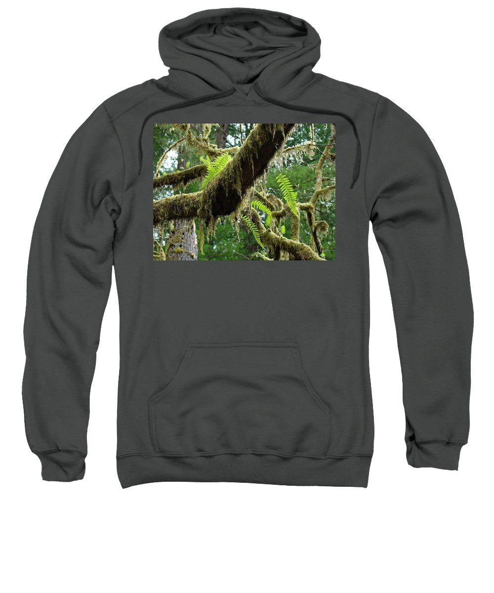 Fern Sweatshirt featuring the photograph Forest Ferns Art Prints Fern Giclee Prints Baslee Troutman by Baslee Troutman