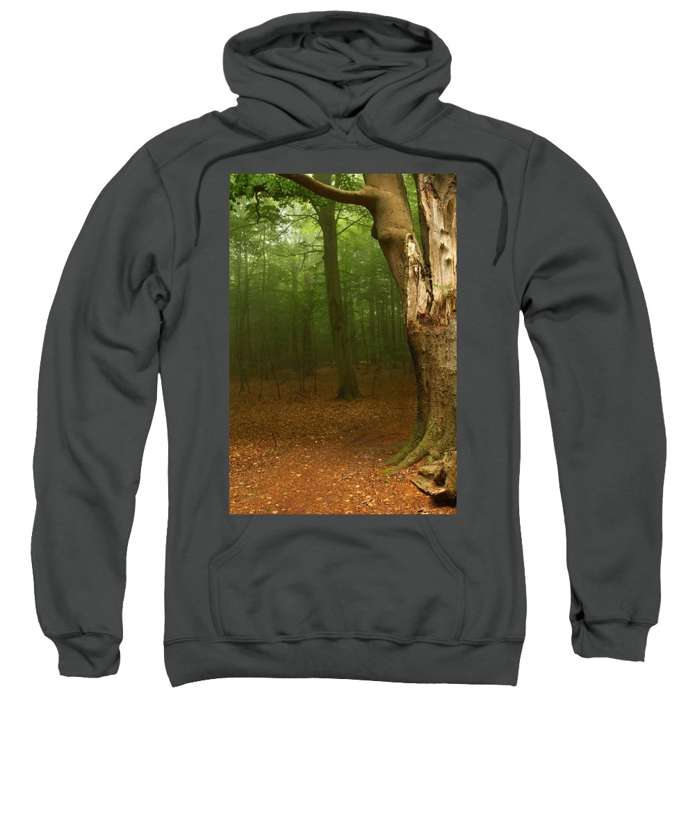 Light Sweatshirt featuring the photograph Forest Light 1 by Heike Hultsch