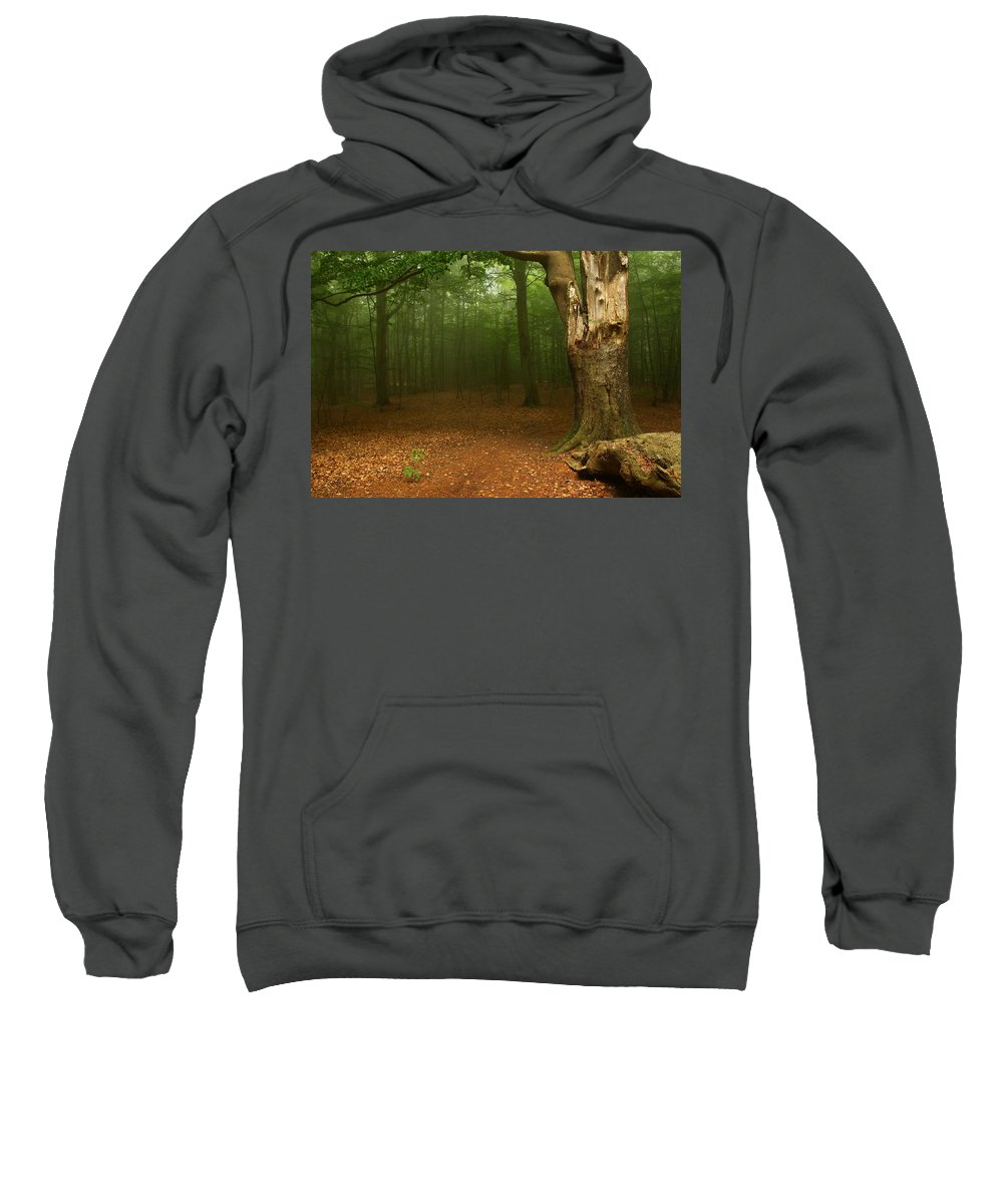 Light Sweatshirt featuring the photograph Forest Light 2 by Heike Hultsch