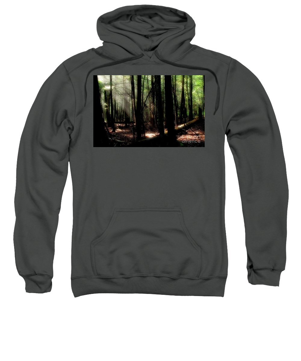 Trees Sweatshirt featuring the photograph Forest Light by Douglas Stucky