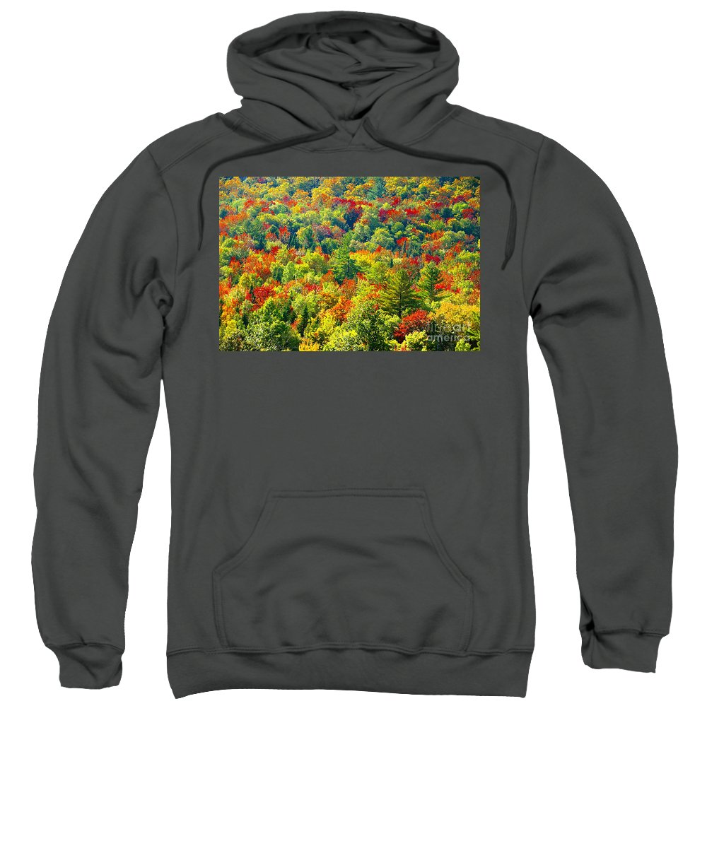 Forest Sweatshirt featuring the photograph Forest Of Color by David Lee Thompson