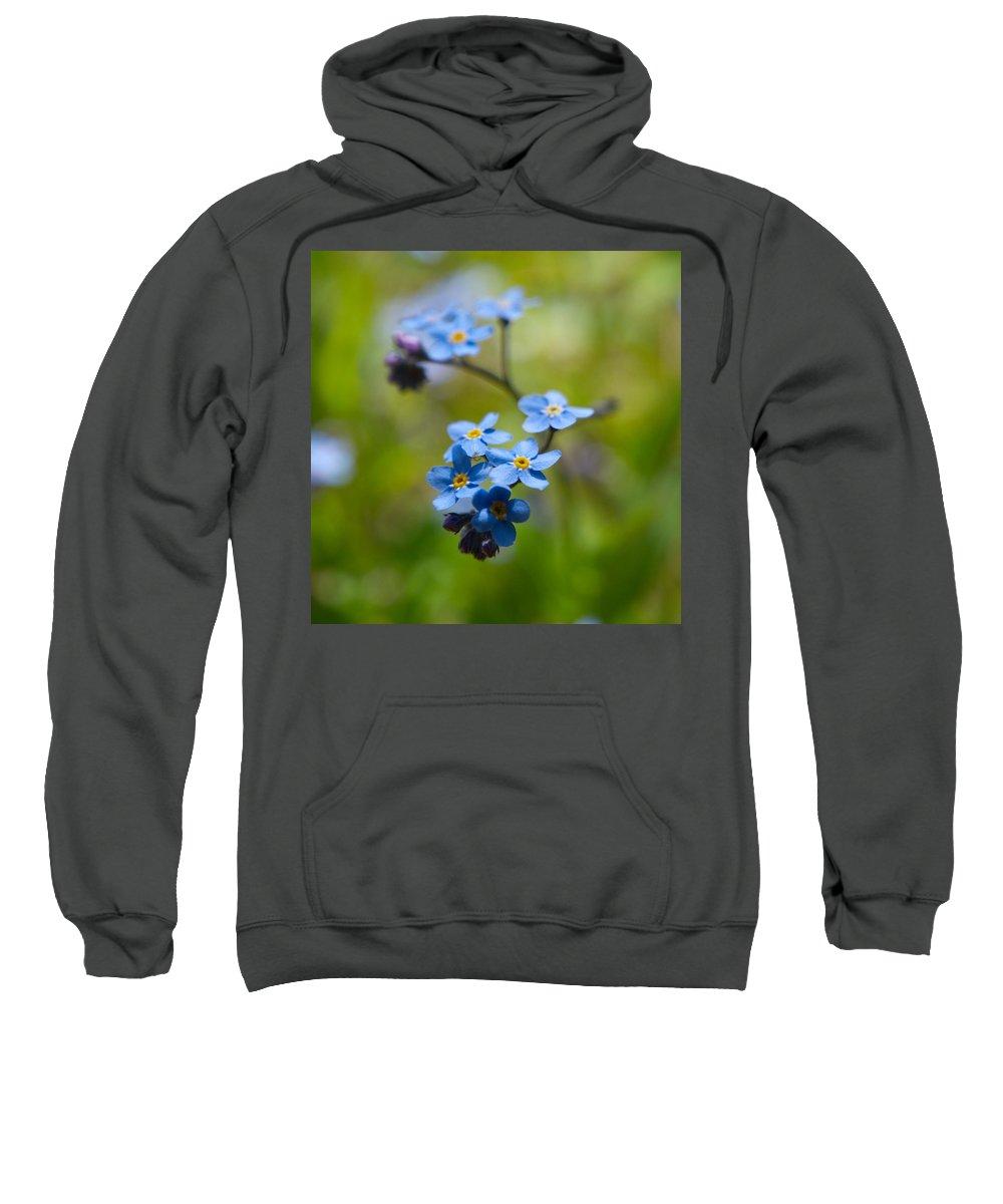 Lehtokukka Sweatshirt featuring the photograph Forget-me-not 1 by Jouko Lehto