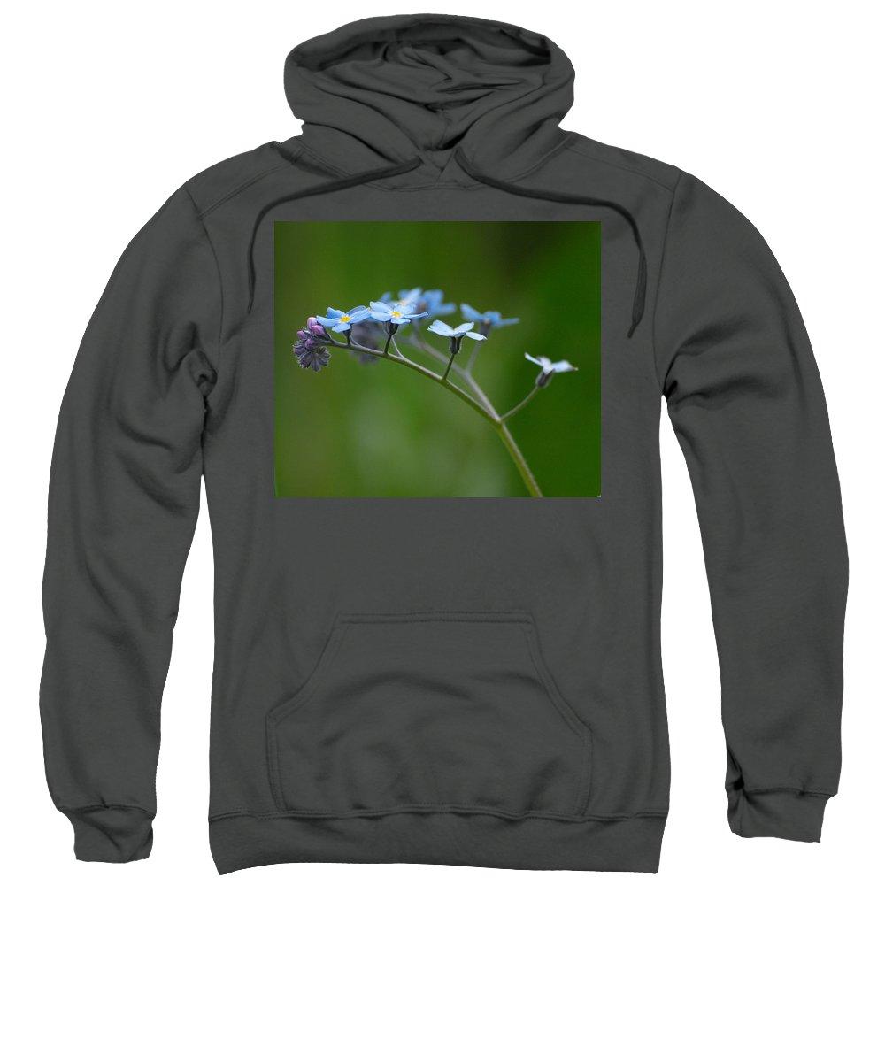 Lehtokukka Sweatshirt featuring the photograph Forget-me-not 2 by Jouko Lehto